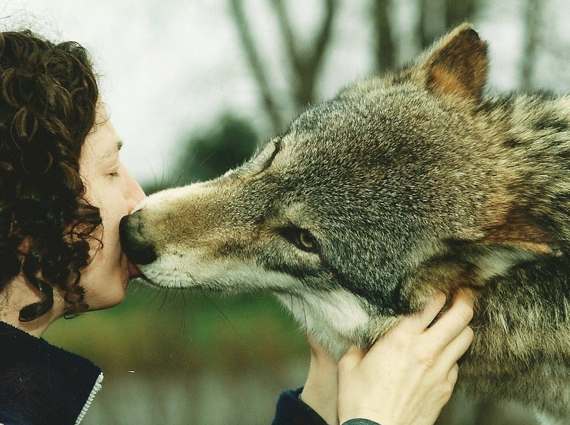 Petting Wolves