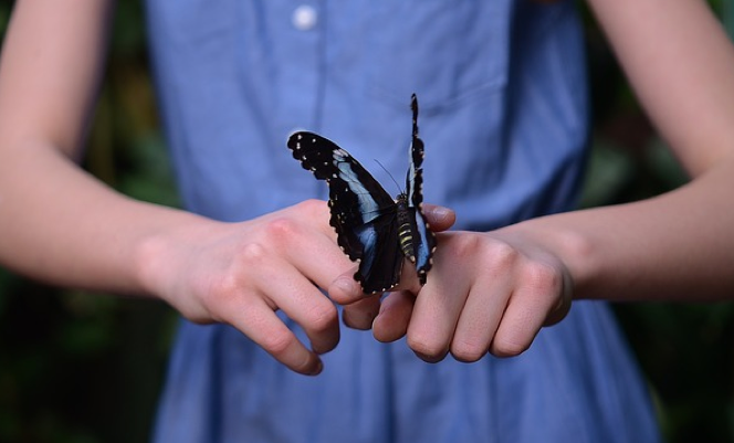 Free photo butterfly in hand